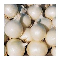 Oignons blanc 6 unités